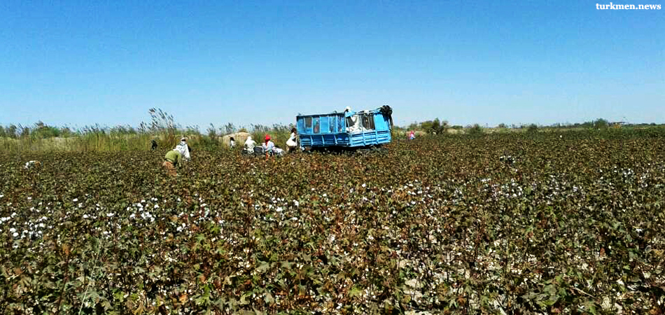 Cotton Harvest 2019 Review: Disastrous in Parts of Turkmenistan