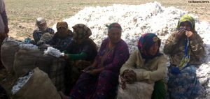 Teachers in Eastern Turkmenistan Sent Cotton Picking en Masse
