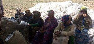 Teachers in Eastern Turkmenistan Sent Cotton Picking en Masse