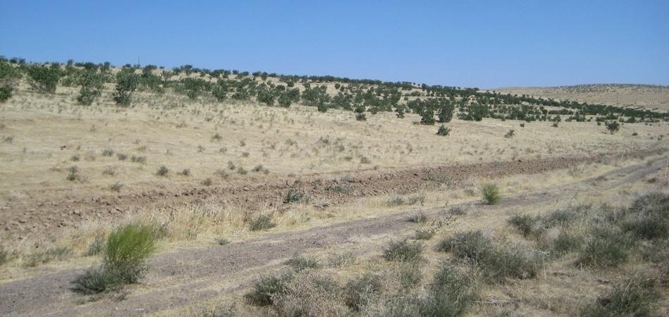 Turkmen Soldiers Die in Crash on Way to Harvest Pistachios